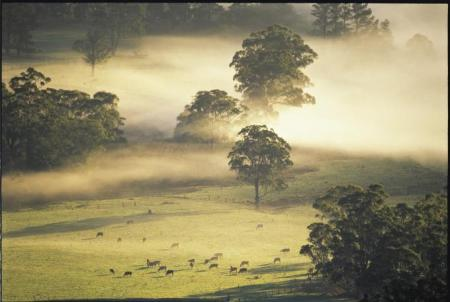 Cleared land clears habitat - Kangaroo Valley's connectivity corridor to provide habitat in the face of Climate Change